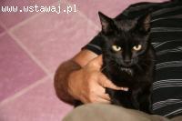Czarna przekochana kotka