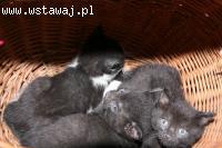 Małe kociaki szukają dobrych domów