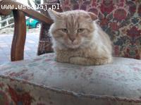 Kot Menel poszukuje świadomego opiekuna