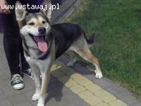 REJ- niezwykły pies patrzący duszą