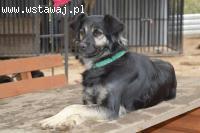 Przyjazna dla psów i kotów, grzeczna Maja szuka domu!