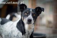 Drobna Szanti, uległa do innych psów sunia szuka kochającego