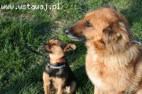 Koka i Kumpel, cudowni psi przyjaciele do adopcji!