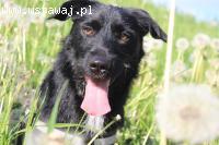 Marcel - młody (ok roczny) psiak szuka domu