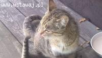 Koteczka szuka kochającego domu!