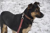 Manuel, młody, niekonfliktowy psiak szuka domu!