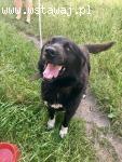 Radosny Bąbelek, niewielki, wesoły psiak szuka domu