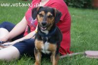 Czapi, 12 miesięczny, radosny psiak szuka domu!
