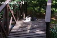 Pączek, super koci indywidualista szuka domu!