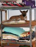 Grzeczny, przyjazny Junior, młody psiak szuka DOMU na zawsze