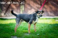 Niewielki, roczny Lolek - delikatny psiak szuka domu!