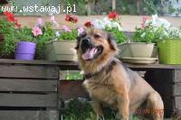 Bruno, chodzący IDEAŁ, cudowny, niewielki psiak szuka domu!