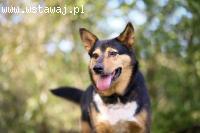 Radosny, kontaktowy Czarek, super psiak szuka super domu!