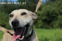 Na ul. Rolniczej w Jaśle znaleziono psa