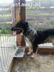 Mobi - idealny psiak do frisbee szuka domu