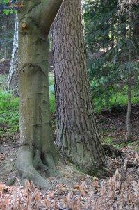 Ostrusza, działka leśna na sprzedaż