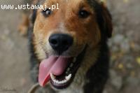 Kapral, młodziutki, przyjazny pies, poznaj go i zakochaj się