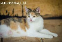 Koty, koteczki - dorosłe, maluchy - pilnie szukają domów!