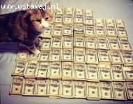 Pożyczka/kredyt dla zadłużonych