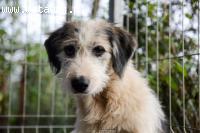Gucio, niewielki, czarujący psiak szuka kochającego domu!