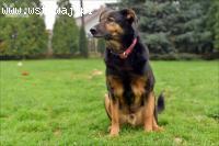Edisonek bardzo fajny, spokojny psiak szuka domu