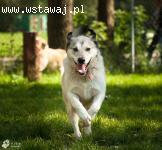 Nelson i Morris wspaniałe, kochane psy szukają wspólnego dom