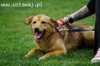 Lisek, delikatny, przyjazny psiak szuka kochającego domu!