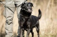 Zaki - ułożony, grzeczny, idealny psiak szuka domu