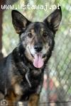 Diego, pies ideał - przyjazny, wesoły, grzeczny, pokochaj go