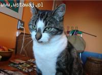 Kotka Fika szuka kochającego domu
