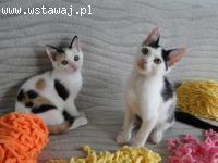 Podwójne szczęście: Elliot i Porzeczka, cudowny koci dwupak!