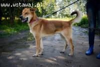 Wesoły młodziak Tenor, przyjazna psina szuka aktywnej rodzin