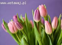 Kwiaciarnia całodobowa - Kraków