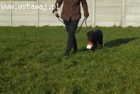 Aldo starszy cudowny pies szuka domu