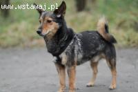 Max wagi piórkowej, przyjazny, nakolankowy, rodzinny psiacze