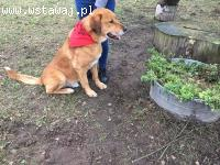 Filip - pozostawiony na śmierć w lesie czeka na swoją szanse