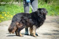 Lucek, wspaniały psi dziadek szuka kochającego domu