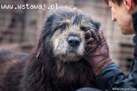 """Brus, pies z ,,Niekończącej się Opowieści"""" BRIARD mix"""
