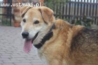 Pies Misiek, kotolubny towarzysz szuka kochajacego domu!