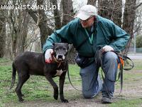 Taurus, łagodny, spokojny pies szuka domu!