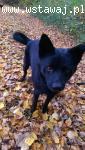 Tymek, psiak uratowany ze schroniska szuka domu!