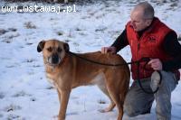 Janosz, psie serce w rozmiarze XL!