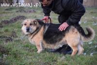 Misio, dzieciolubny, pogodny psiak szuka domu!