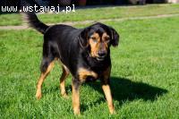 Zorba – uroczy pies szuka miłości