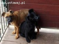 Rumba i Tango, SZCZENIĘTA szukają domów!