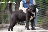 Czarny, niekonfliktowy, delikatny pies szuka domu na zawsze!