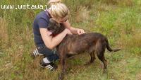 Brutus, terrier mix cudowny, niekonfliktowy psiak do adopcji