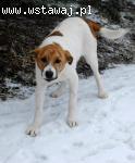 Yeti,  6 miesięczne psie dziecko szuka domu!