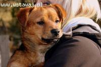 Mały, młodziutki, 7 kilogramowy psiaczek do pokochania!