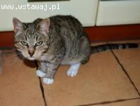 Bella, młoda, przyjazna i niekonfliktowa koteczka do pokocha